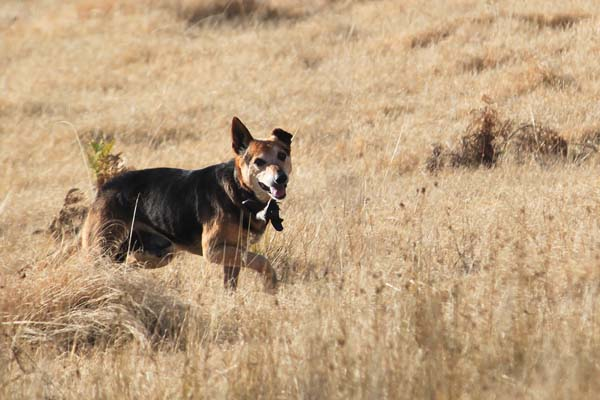 BLOG_farm_dog_or_dingo_IMG_9841.jpg