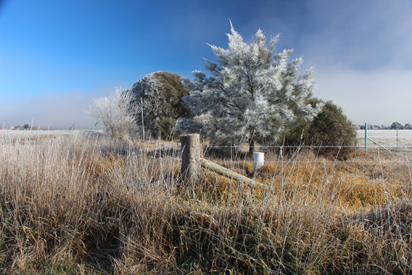 Ex_Canberra_Frost_600_IMG_9601.jpg