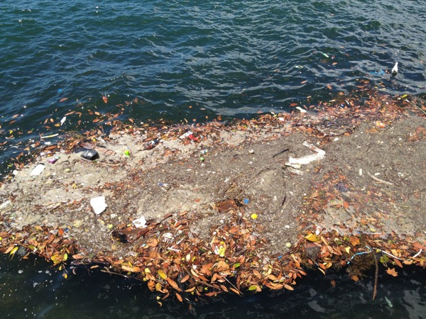 Blog_harbour_litter_IMG_0186.jpg