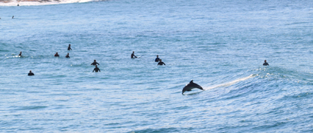 Leaping_dolphin_Bronte_2-7-2011_IMG_7645.jpg