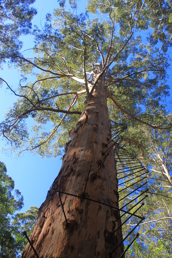 Blog_WA_tree_climb_pegs_IMG_9932.jpg