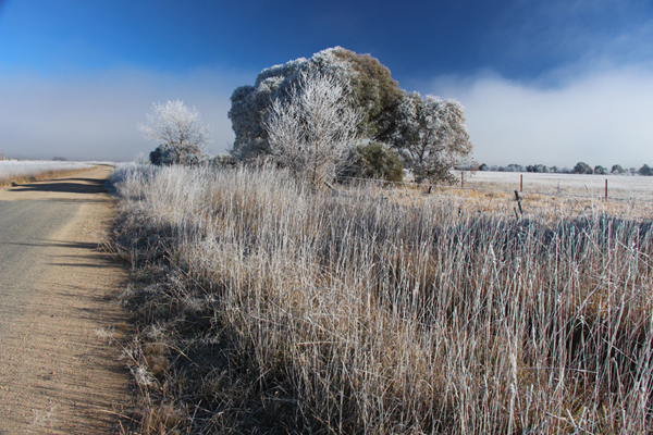 Ex_Canberra_Frost_600_IMG_9613.jpg