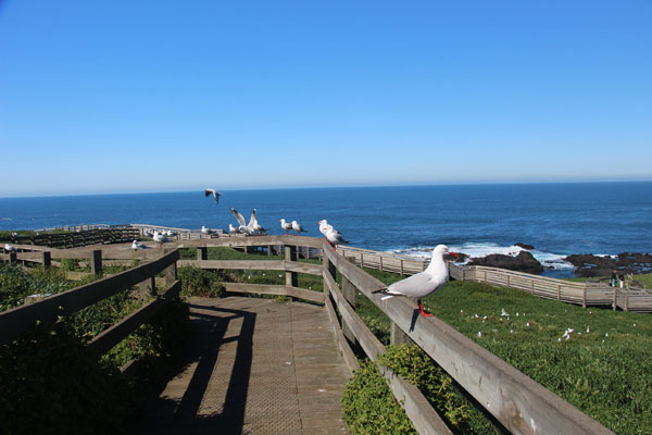 BLOG_Phillip_Island_boardwalk_birds_IMG_3956.jpg