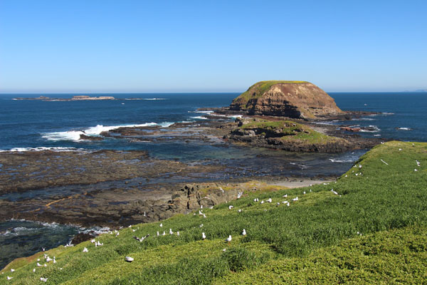 BLOG_Phillip_Island_Nobbies_IMG_3964.jpg