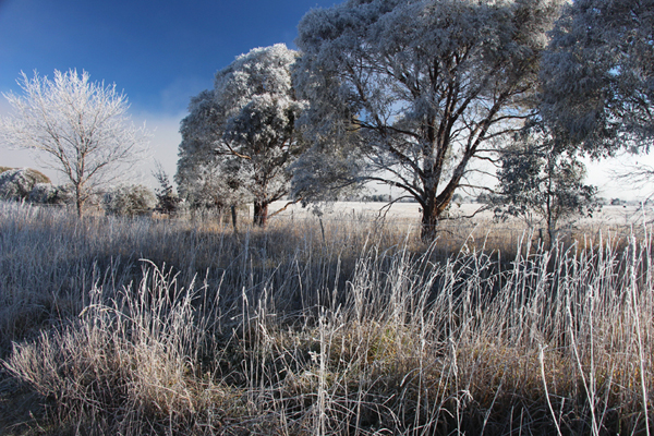 Ex_Canberra_Frost_600_IMG_9624.jpg